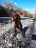 Wachtelhunde